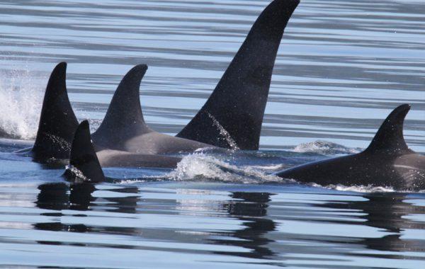 Mackay Whalewatching